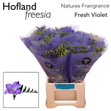 Fr Fresh Violet