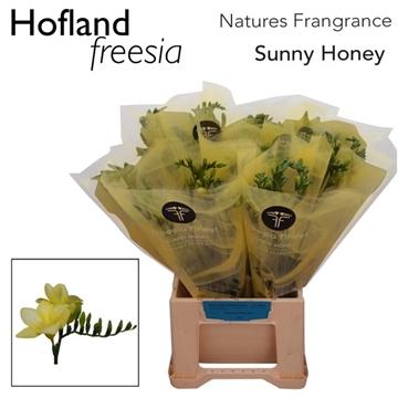 Fr Sunny honey