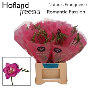 Fr Romantic passion