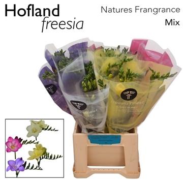 Fr Natures Fragrance mix