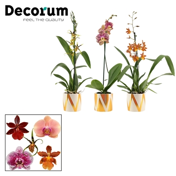 Orchideeën 1 tak mix in Blitz (Decorum)