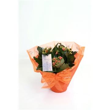 Kp-634.1 oranje - rosalina gifts
