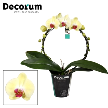 Decorum Mirror Limelight