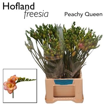 Fr du  Peachy Queen