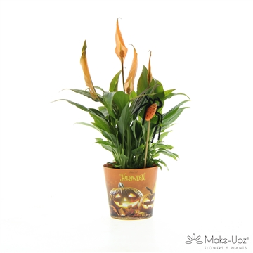 Spathiphyllum 10,5 cm Make-Upz Halloween