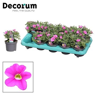 Calibrachoa - 10,5 cm - Uno Pink - Decorum