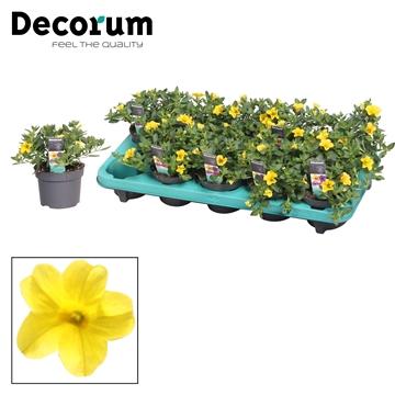 Calibrachoa - 10,5 cm - Uno Yellow - Decorum