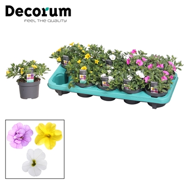 Calibrachoa - 10,5 cm - mix - Decorum