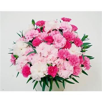 Dianthus - 10,5 cm - Decorum - I LOVE YOU