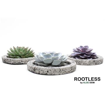 ROOTLESS Echeveria mix, Koala bowl