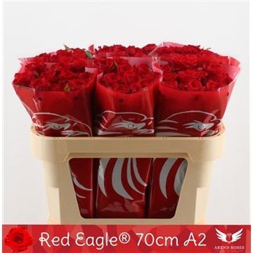 R Gr Red Eagle