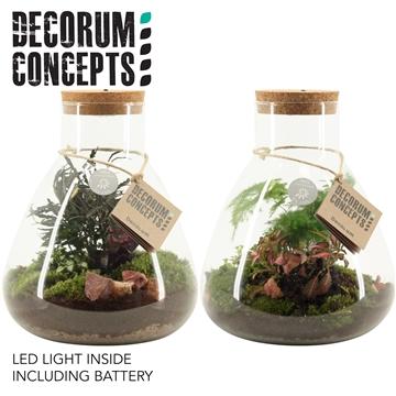 Terrarium Erlenmeyer met lamp (Decorum Concepts)