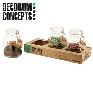 Terrarium Weckpot 3 liter Fittonia mix (Decorum Concepts)