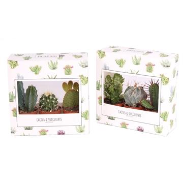 3er cactus prickly doos