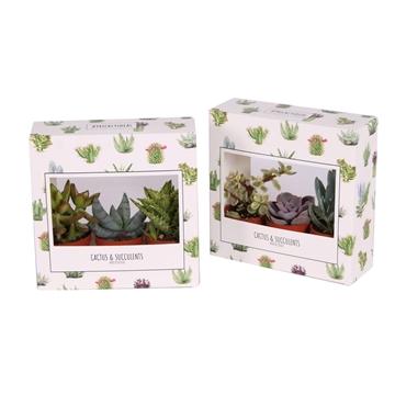 3er succulent prickly doos