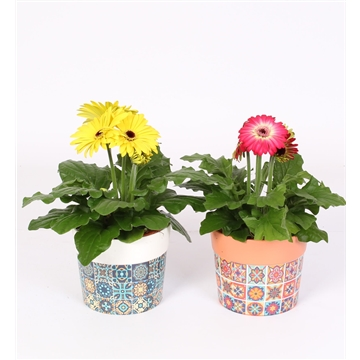 Gerbera 2+Bl 12cm in keramiek Portugees decor assorti
