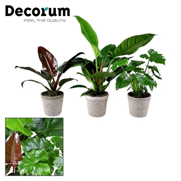 Collectie Soft Illusion - Philodendron mix in mand Jelle (Decorum)