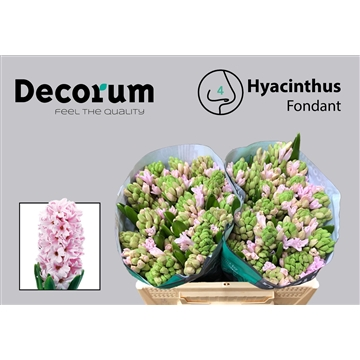 HYAC Fondant (Auction Decorum)