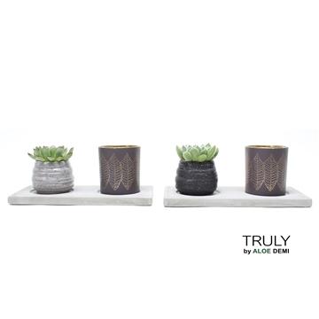 TRULY Echeveria mix plateau with a tea light holder