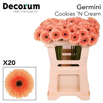 Ge Mi emmer Cookies N Cream X20