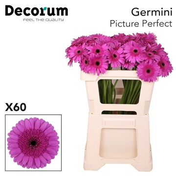 Ge Mi emmer Picture Perfect X60