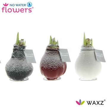 No Water Flowers Waxz® Snow