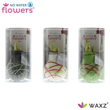 No Water Flowers Waxz® Art Picasso in Koker