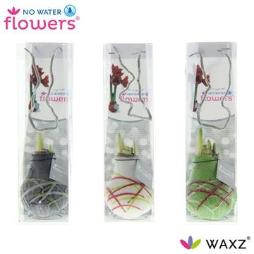 No Water Flowers Waxz® Art Picasso in tasje