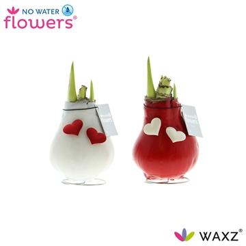 No Water Flowers Waxz® VALENTIJN