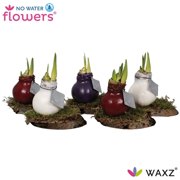 No Water Flowers Waxz® on Wood Mix