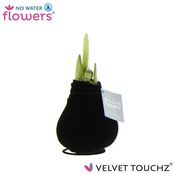 No Water Flowers Velvet Touchz® Black