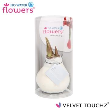 No Water Flowers Velvet Touchz® White in koker