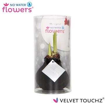 No Water Flowers Velvet Touchz® Black in koker