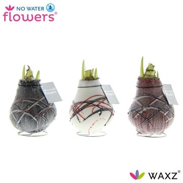 No Water Flowers Waxz® Art v Gogh White Flower