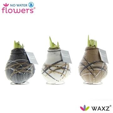 No Water Flowers Waxz® Art Rembrandt White Flower