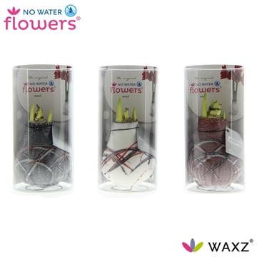 No Water Flowers Waxz® Art v Gogh in Koker