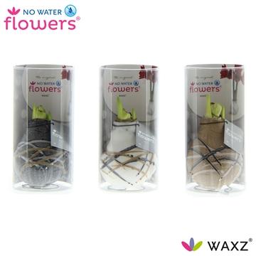 No Water Flowers Waxz® Art Rembrandt in Koker