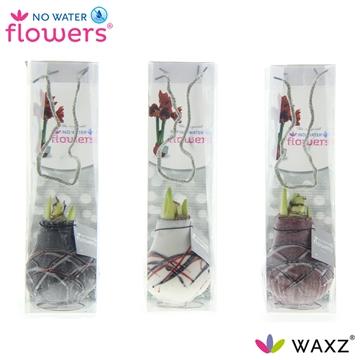 No Water Flowers Waxz® Art v Gogh in tasje