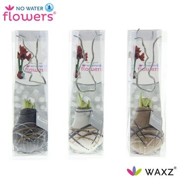 No Water Flowers Waxz® Art Rembrandt in tasje
