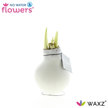 No Water Flowers Waxz® White