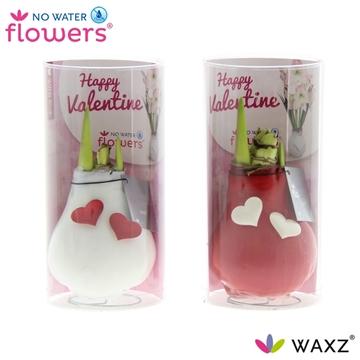 No Water Flowers Waxz® Valentijn rood/wit waxz met hartjes in ko