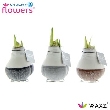 No Water Flowers Waxz® Dipz Natural
