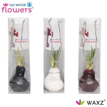 No Water Flowers Waxz® Message Printz Wonderful Xmas in tasje