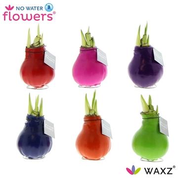 No Water Flowers Waxz® Happy Mix