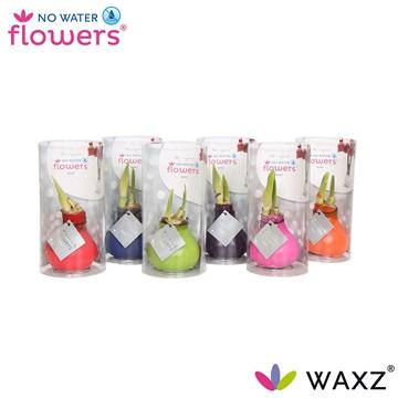 No Water Flowers Waxz® Happy Mix in koker