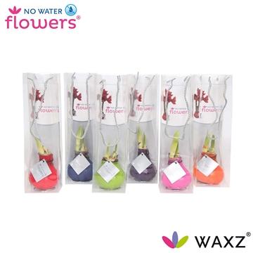 No Water Flowers Waxz® Happy Mix in tasje