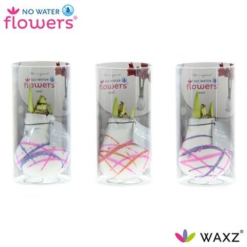 No Water Flowers Waxz® Art Karel Appel in koker