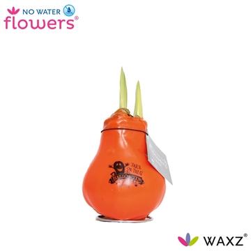 No Water Flowers Waxz® Message Printz Halloween