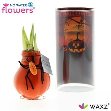 No Water Flowers Waxz® HALLOWEEN