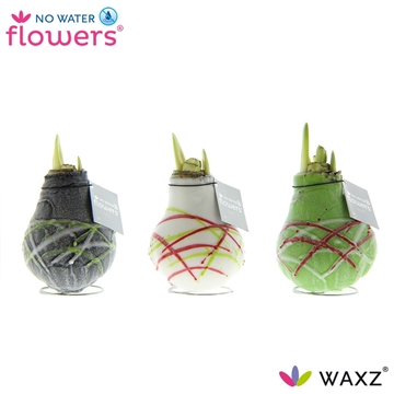 No Water Flowers Waxz® Art Picasso White Flower